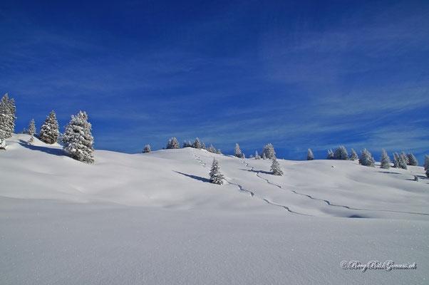 Winterwunderland!