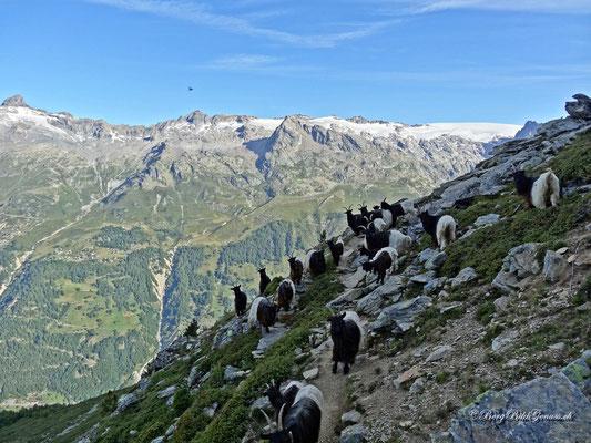 Gegenverkehr im Abstieg von der Hütte
