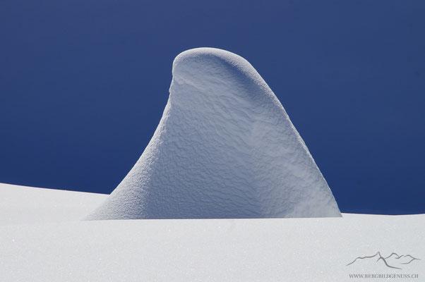 Schneezwerg