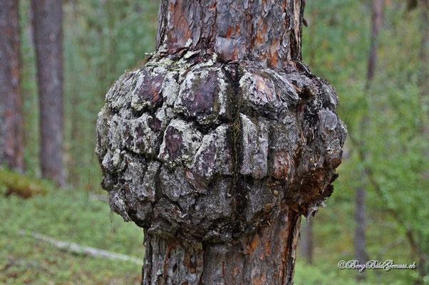 Gebilde am Baum