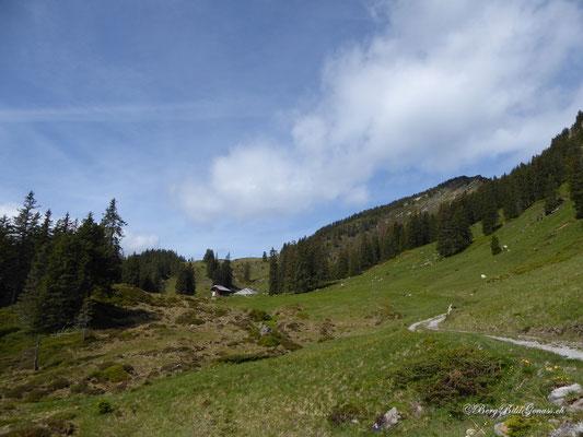 Alp Wängen in Sicht