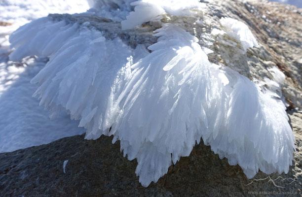 Eisbart