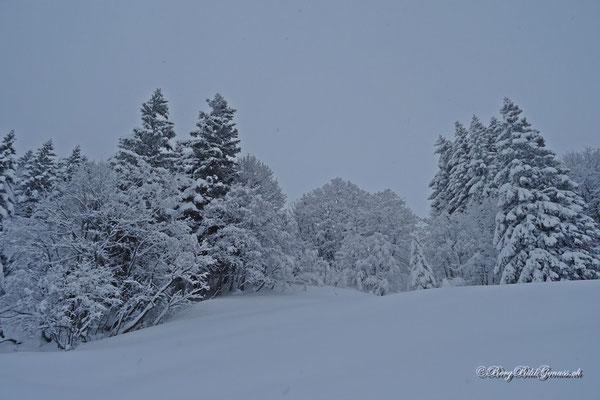 Landschaft in Grau und Weiss...hat auch seinen ganz eigenen Reiz...