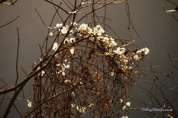 Herbstflor