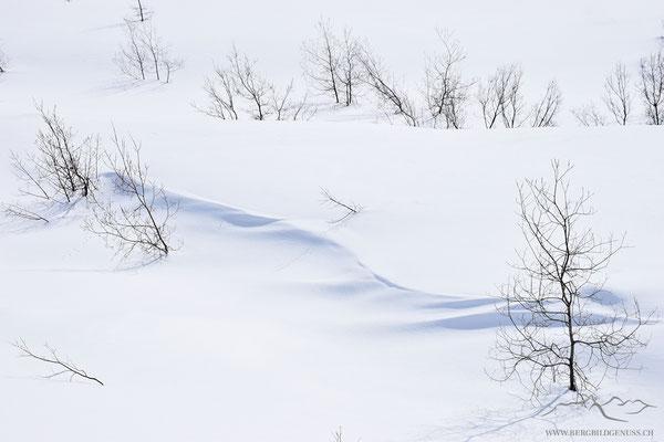 Filigran im Schnee