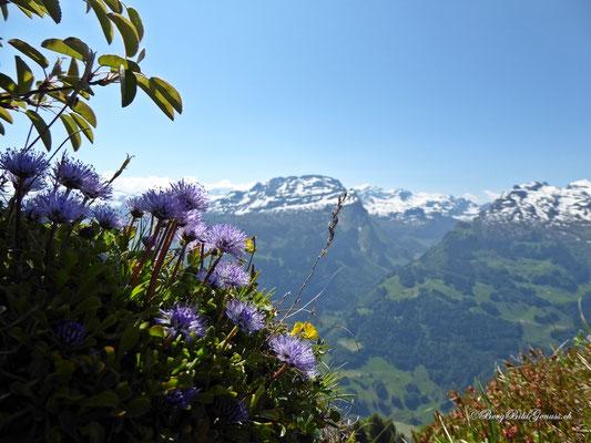 Kugelblumen vor Wasserberg