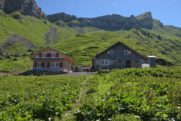 Alp Zingel - mit neuer Hütte