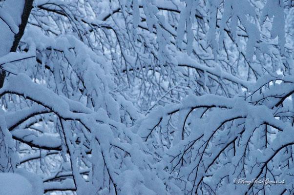 Winterliche Kontraste