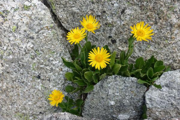 Blumengruss I