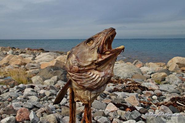 Fischkopp I