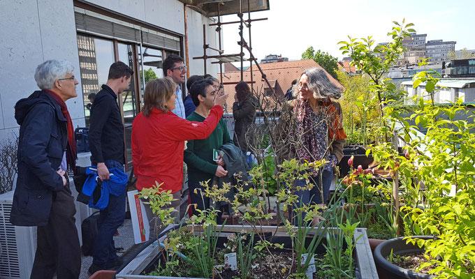 Besonderes Projekt: die Einrichtung eines Schulgartens auf dem Balkon und der Dachterrasse des Gimnazija Jožeta Plečnika. Foto: Ulrichs