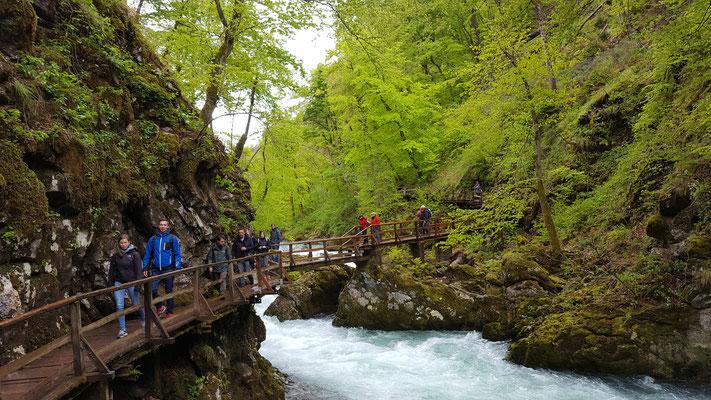 Wanderung durch die Vintgar-Schlucht. Foto: Ulrichs