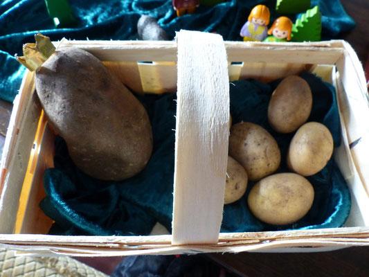 In einer Kartoffelkiste lagen schöne dicke Kartoffeln ...eine noch dicker als die andere