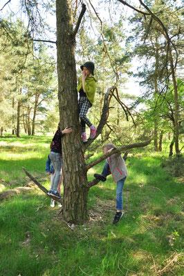 Kinder auf dem Kletterbaum