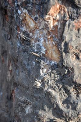 Keilerspuren am Malbaum