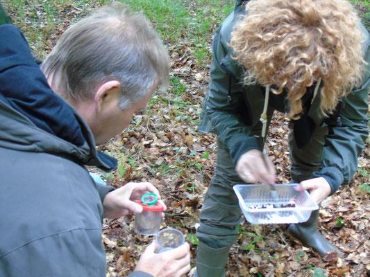 Sammeln von Würmern, Schnecken, Spinnen