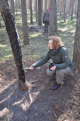 Buchenholzteer aufbringen
