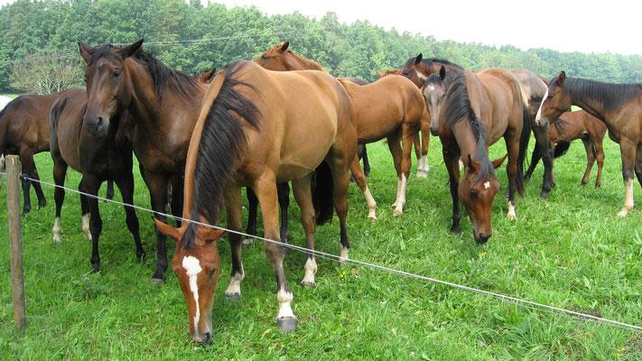 Pferde am Uferrand