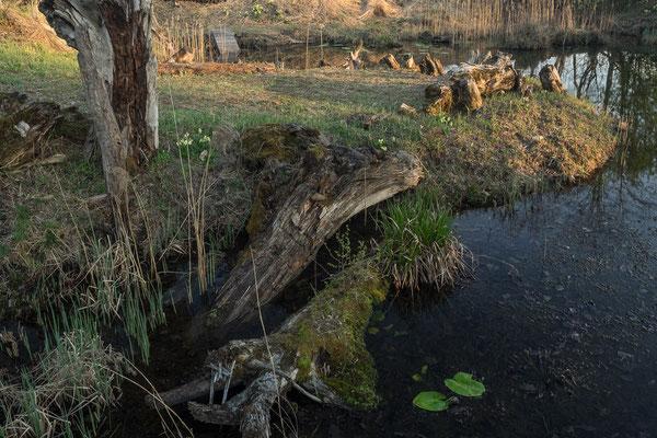Biotop Broma