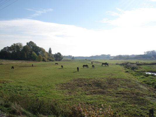 Das Landschaftsschutzgebiet direkt neben der Ferienwohnung mit Pferden
