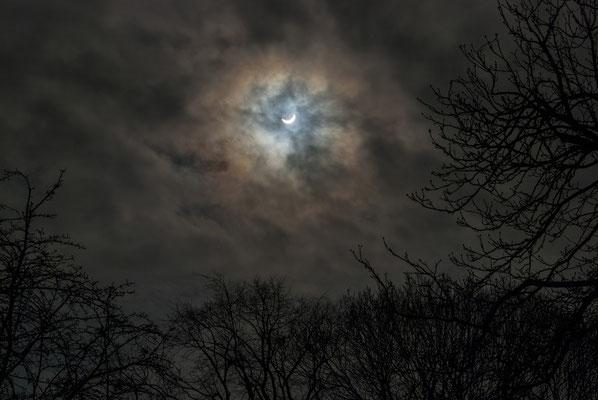 6. Eclipsi al bosc