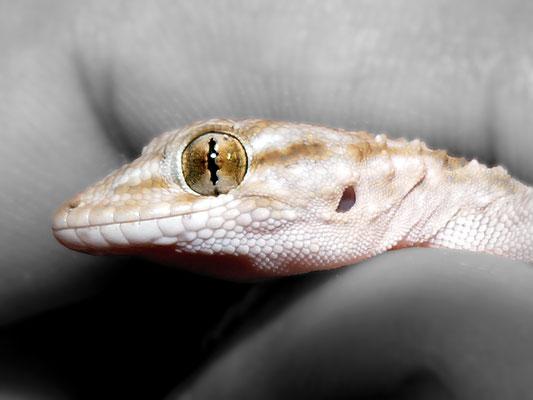 3. Mirada de reptil