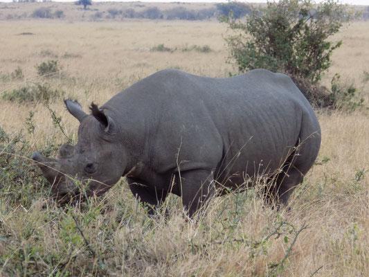 15. Rinoceronte, Masái Mara