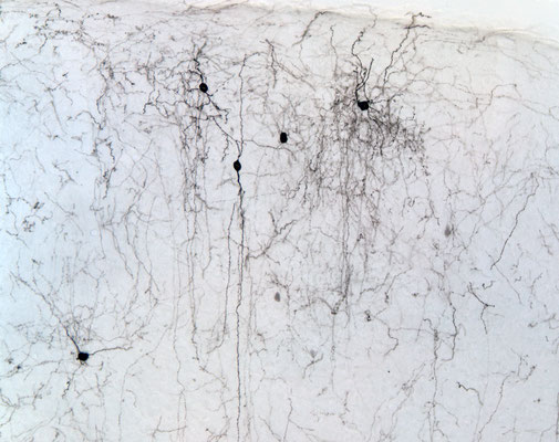 54. Interneuronas