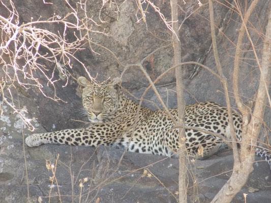 14. Leopardo, Serengueti