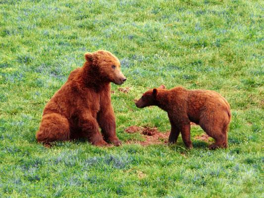 50. Maternidad animal