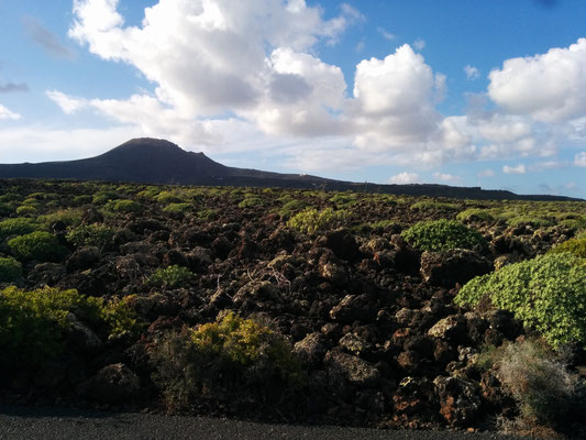 41. Vida sobre la lava (Lanzarote)