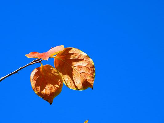 25. Llegando el otoño