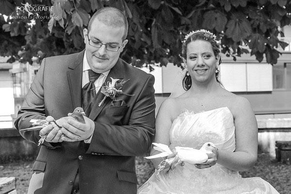 Tauben, Hochzeit Solothurn