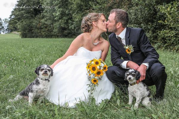 Brautpaar Kuss mit Hunden