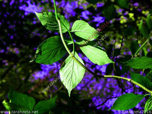 Farblich übersteuertes Blattwerk in Blau und Grün