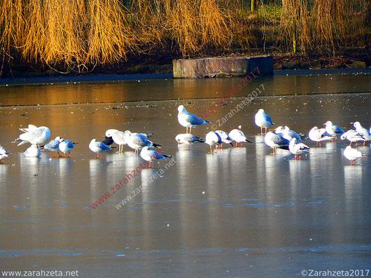 Möwen auf zugefrorenem See