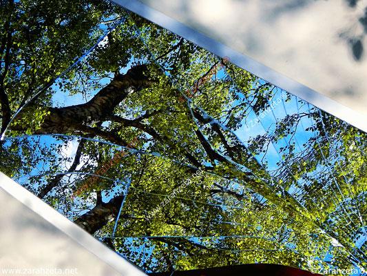 Zerbrochener Spiegel mit Baum im Spiegelbild