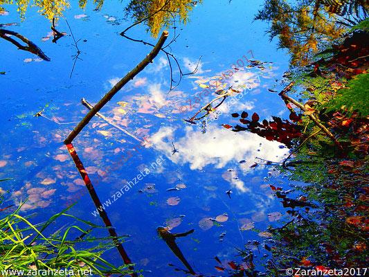 Wasser-Wald-Wolken-Motiv in einem kleinen Waldsee