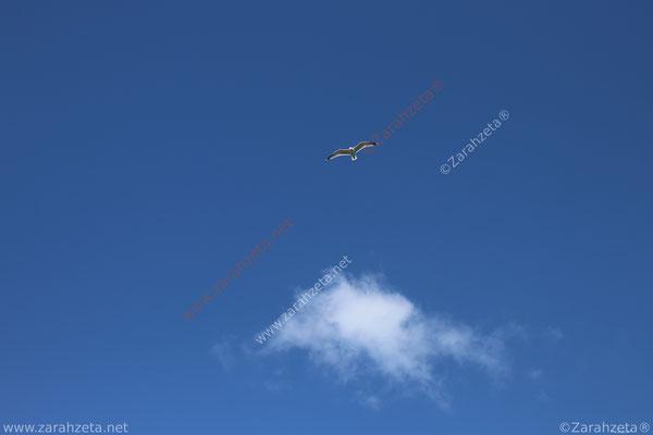 Fliegende Möwe am blauen Himmel als Startup