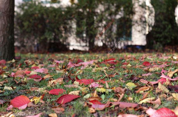 Bunter Laubboden im Park