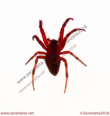 Rote Spinne als Avantgarde
