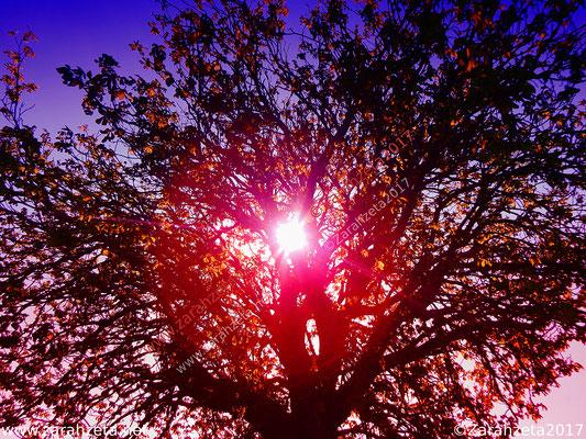 Sonnenlicht als rote Lichtkugel im Baum