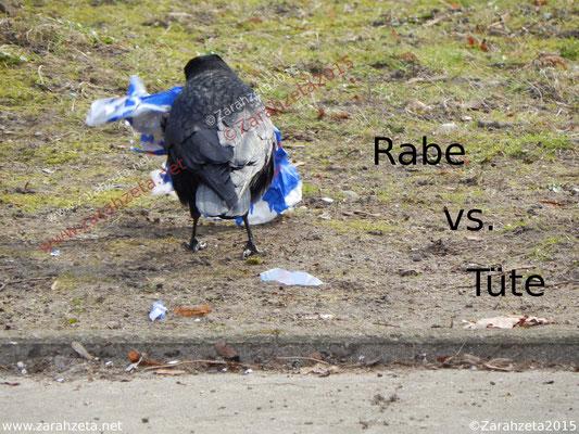 schwarze Krähe und Müll