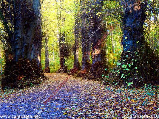 Waldweg als Feenweg im Märchenwald