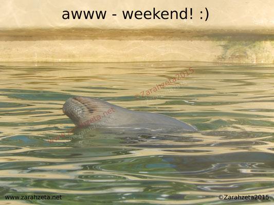 Schwimmende Robbe im Wasserbecken als Wellness