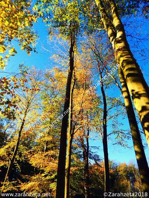 Bunter Wald im Spätsommer