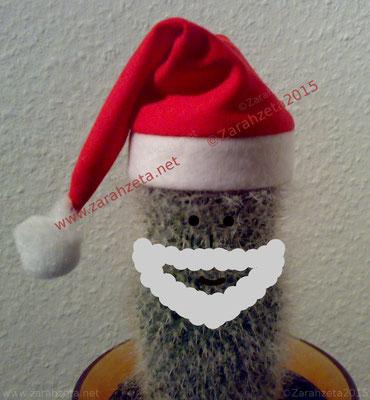 Kaktus als Weihnachtsmann