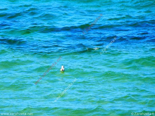 Maritim mit kleiner Möwe auf dem großem Meer