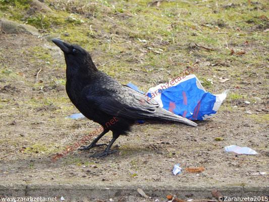 Schwarze Krähe mit Tüte
