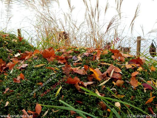 Herbstlaub am Seeufer